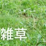 夏~秋に多い草むしり